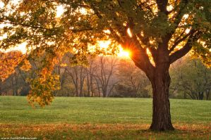 When Your Heart Calls For Me by JustinDeRosa
