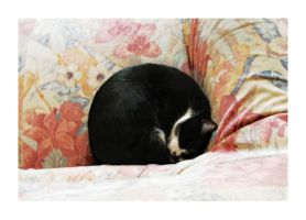 Casey curled up by 19eight-seven