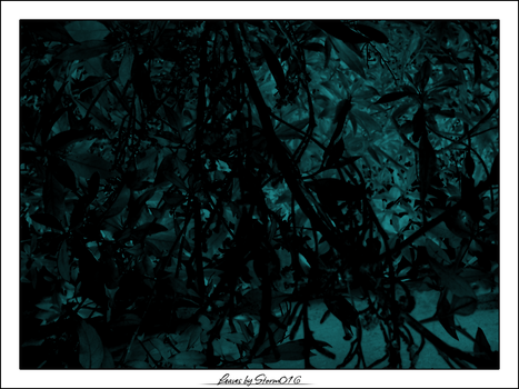 Leaves by Storm016