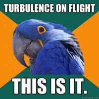 Paranoid Parrot, airplanes meme! by LPawesome