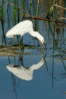 Egret Mirror by Kippenwolf