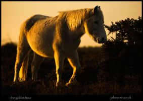 the golden hour by JakeSpain