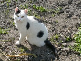 Black and White Cat by silent9213hill
