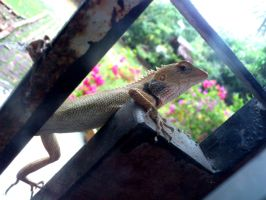 wild gecko2 by plainordinary1