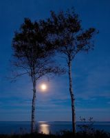 Moonlight Serenade by EvaMcDermott