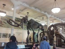 Mammoth Skeleton by Haxorus54