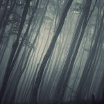 The Forest by leenik