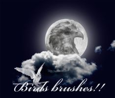 Birds brushes by X-Cerberus-X