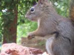 Nuts for Nuts 3 by ChevyRay