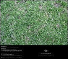 Grass 02 by Neyjour