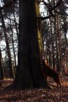 The great tree by ImperterritoCervo