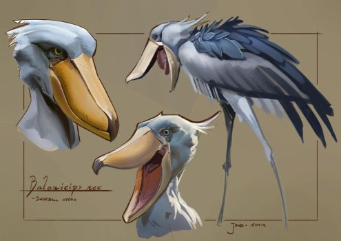 Sketchbook - Colour and Light (Shoebill) by CaconymDesign