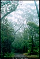Mt Keira Rainforest 1 by buddh4