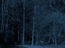Dark Blue Forest by Limited-Vision-Stock
