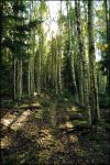 BG Afternoon Woods by Eirian-stock