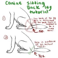 Canine Back Leg Tutorial_Sitting Down by FelonDog