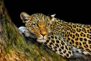 Leopard by ditney