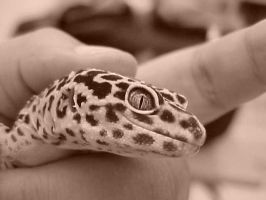 Leopard Gecko I by kk-jazz
