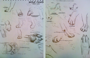 Wolf paws- a study by Gashu-Monsata