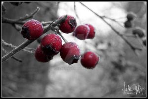 Red Berries by Hiersein