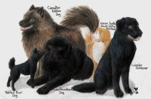 Canadian Dog Breeds by Toru-Inu