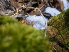 MOSS-SCAPE V by zraclooc