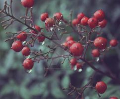 berry droopy by kristenhopkins