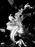 Lillies by neurolepsia