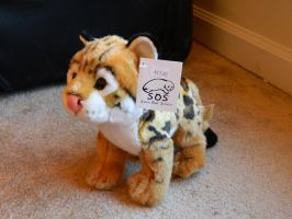 Ocelot Plush by AlixRae