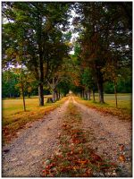Trees Alley - Autumn by grenouille-enchantee