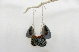 Charles Darwin Earrings (Callithea philotima) by TheButterflyBabe