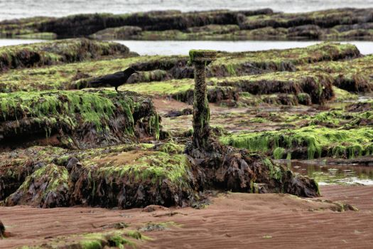 The raven and the wrack ( new edit ) by UdoChristmann