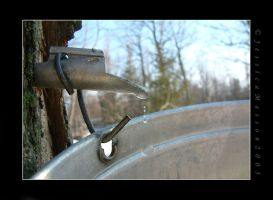 Spring Tap by TheBug