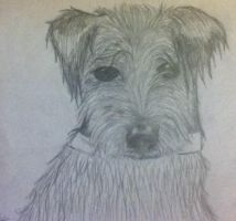 Another dog drawing by b24beanz