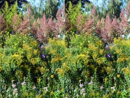 Challenging Coombe Wood Flower Border Stereo by aegiandyad