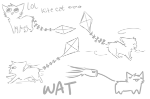 Kite Cat what by rizusaur