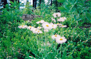 Camp 2010 - Blurry by Chrysanthe-mums