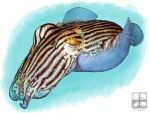 Striped Pyjama Squid by rogerdhall