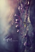 Coming Of Spring II by Light1108