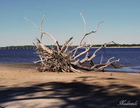 dead tree by nadineelc