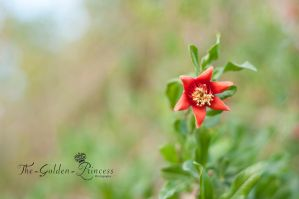 The pomegranate flower .. by The-Golden-Princess