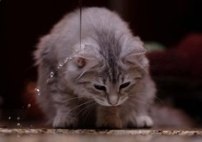 Kitten Under Faucet by Mischi3vo