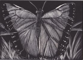 Butterfly 1 by DefyingIndecision