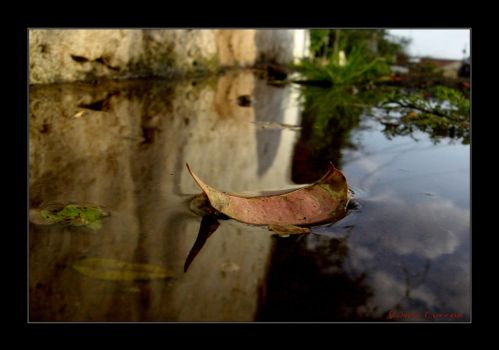 leaf of the transformation by zapping