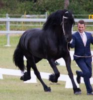 STOCK - Friesian Show 2012-136 by fillyrox
