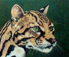 Ocelot by KittyKed
