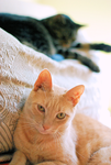 My Cats by blackiliner