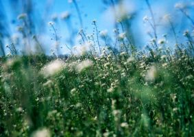 Wild flowers I by PeaceLoveHappiness