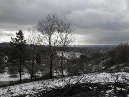 winter landscape from a burned forest. by Cippman