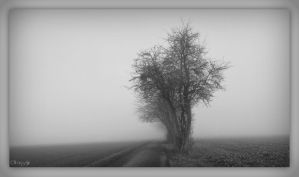 coming through the mist by Weissglut